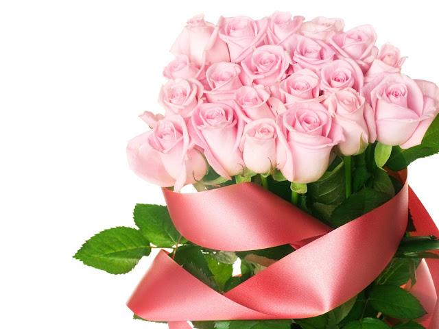 hoa hồng phấn đẹp nhất thế giới