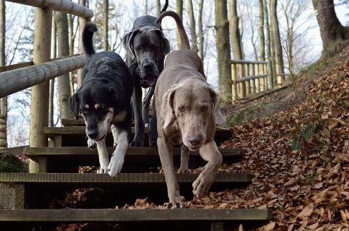 beste hondenvoer test