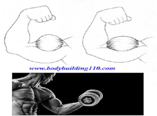 best  Workout Techniques for Much Bigger Biceps