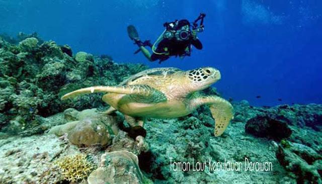 Taman Laut Terindah Di Indonesia
