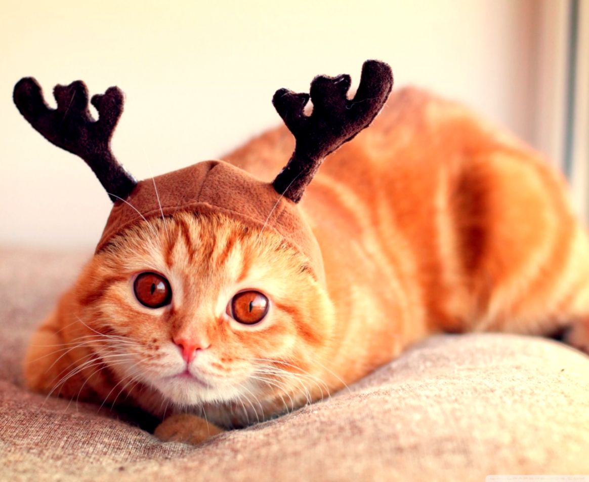 Cat With Reindeer Funny Animal Wallpaper Top Wallpapers
