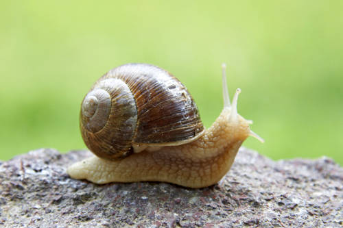 How Mollusks Get Food