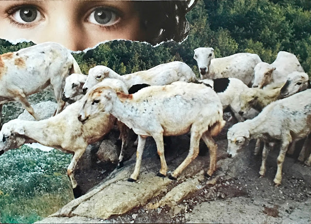 """Don't follow the herd"" collage with sheep and eyes"