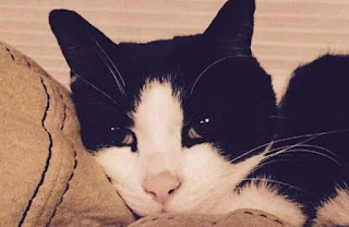 кот бублик фото