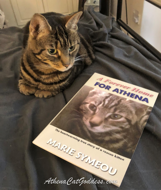 tabby cat poses with her rescue book