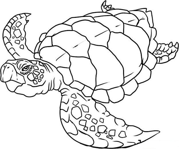Sea Animals Coloring Pages Wonderful With Picture Of Sea Animals