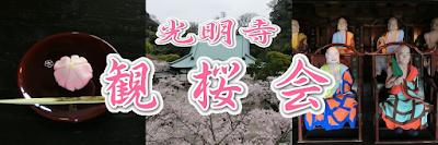 鎌倉:光明寺観桜会