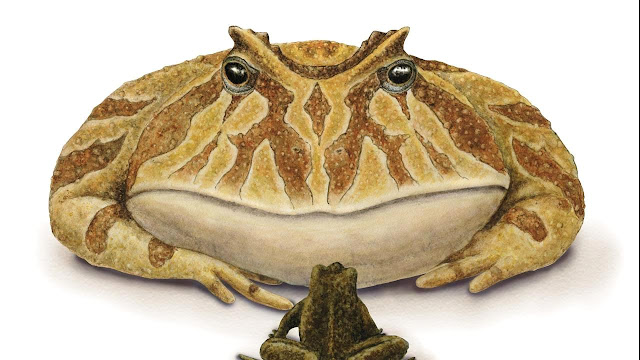This Gigantic, Extinct Devil Frog Was Capable of Eating Dinosaurs