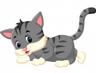 nutrisi kucing hamil