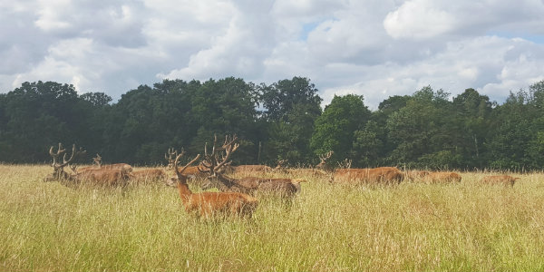 Richmond Park en Londres