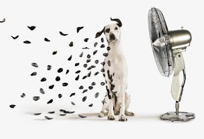 Fan blows away dalmatian spots picture