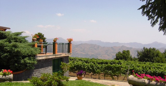 Informações sobre a Gambino Winery