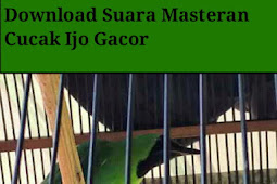 Download Suara Cucak Ijo Gacor Untuk Masteran
