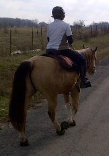 PSSM Horse Tack - Renegade Hoof Boots