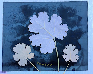 Wet cyanotype, Sue Reno, Image 27