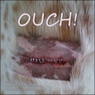 Canine Cyst Removal Staples