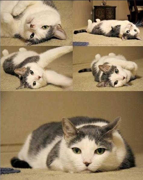 Ekspresi Lucu Kucing