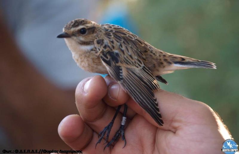 Δακτυλιώσεις πουλιών με... Ιστορία στο Δέλτα Έβρου!