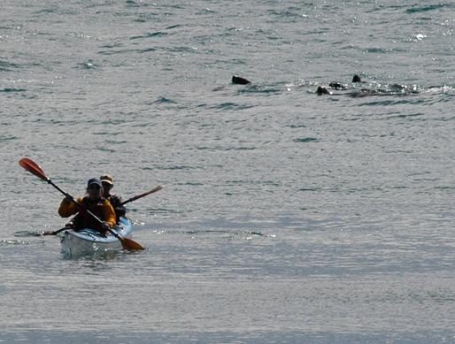 kayak en Península Valdés Patagonia Argentina