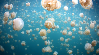 Jellyfish Lake 18