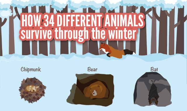 How 34 Different Animals Survive the Winter