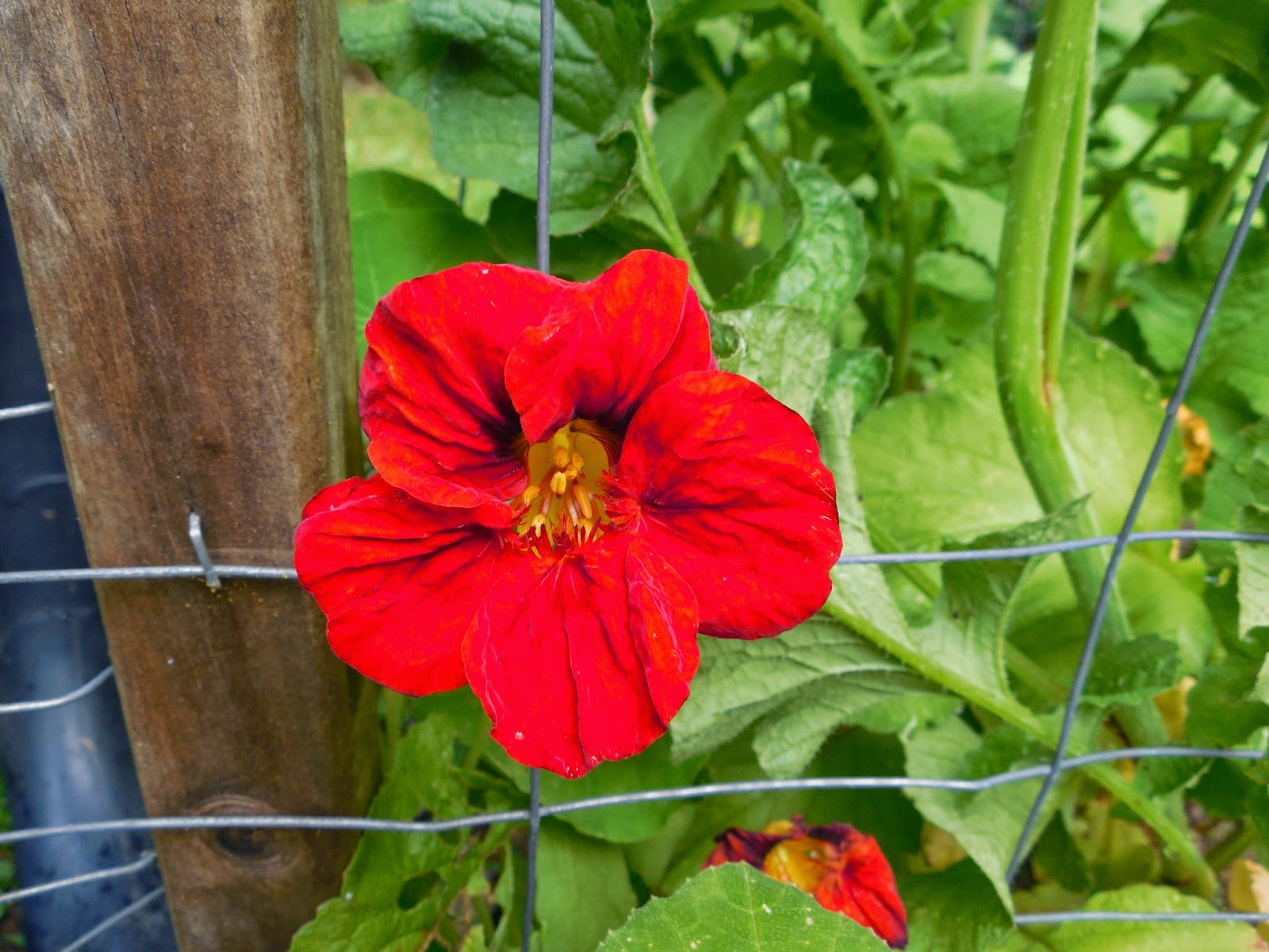 Share it! Science : Grow a Themed Flower Garden with your Children