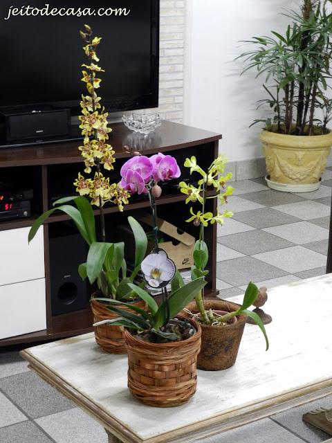 orquideas variadas