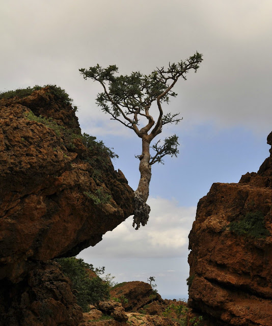 A tree stands on mountain edge