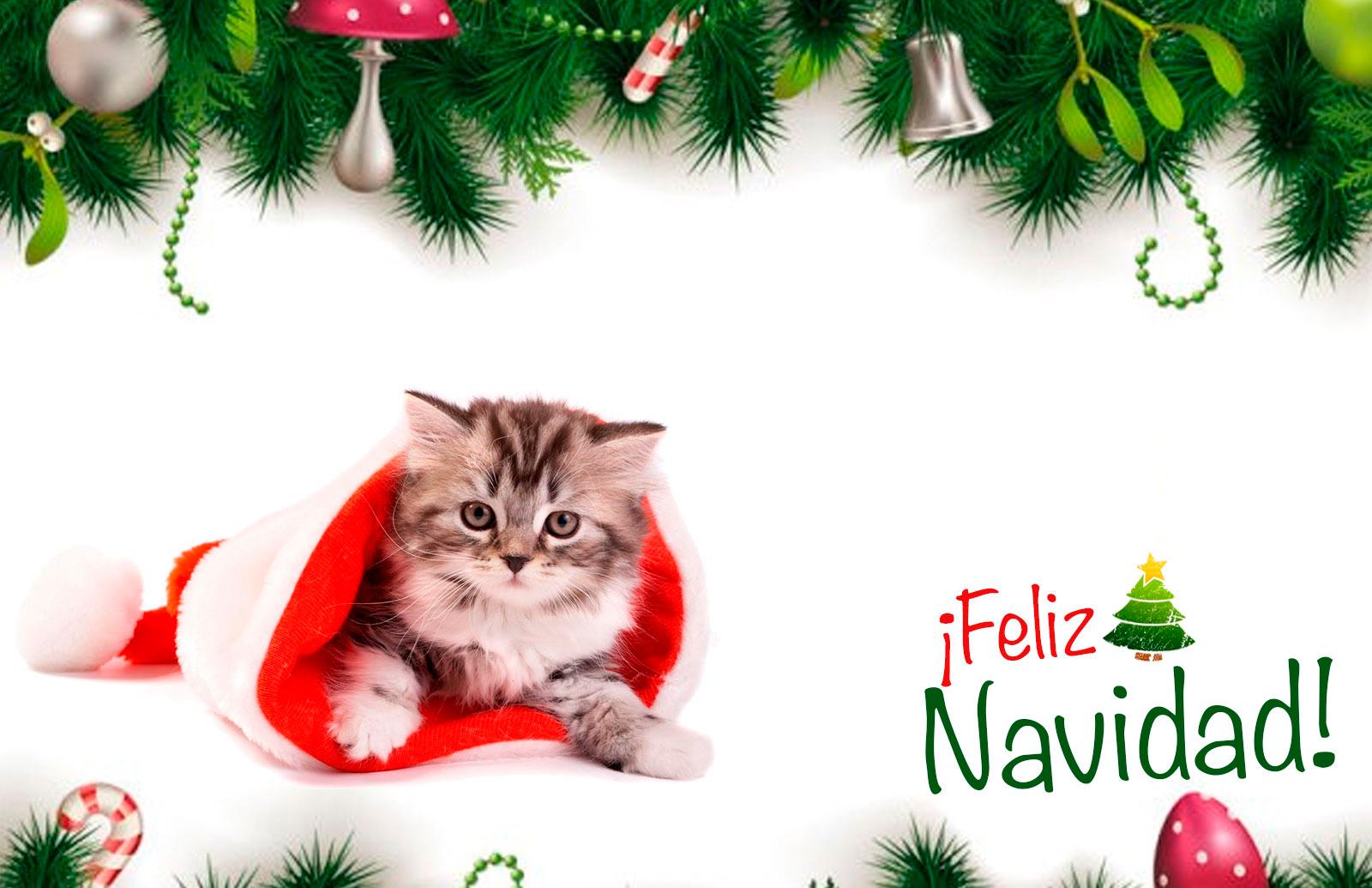 Colecci n de tarjetas de navidad de perros y gatos - Dibujos de postales de navidad ...
