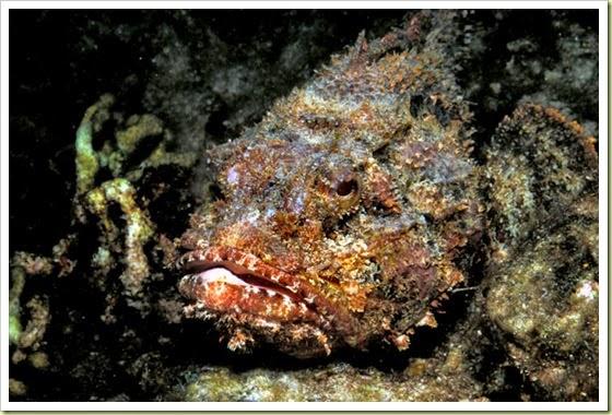 omorfos-kosmos.gr - Τα 10 πιο δηλητηριώδη ζώα στον κόσμο (Εικόνες)