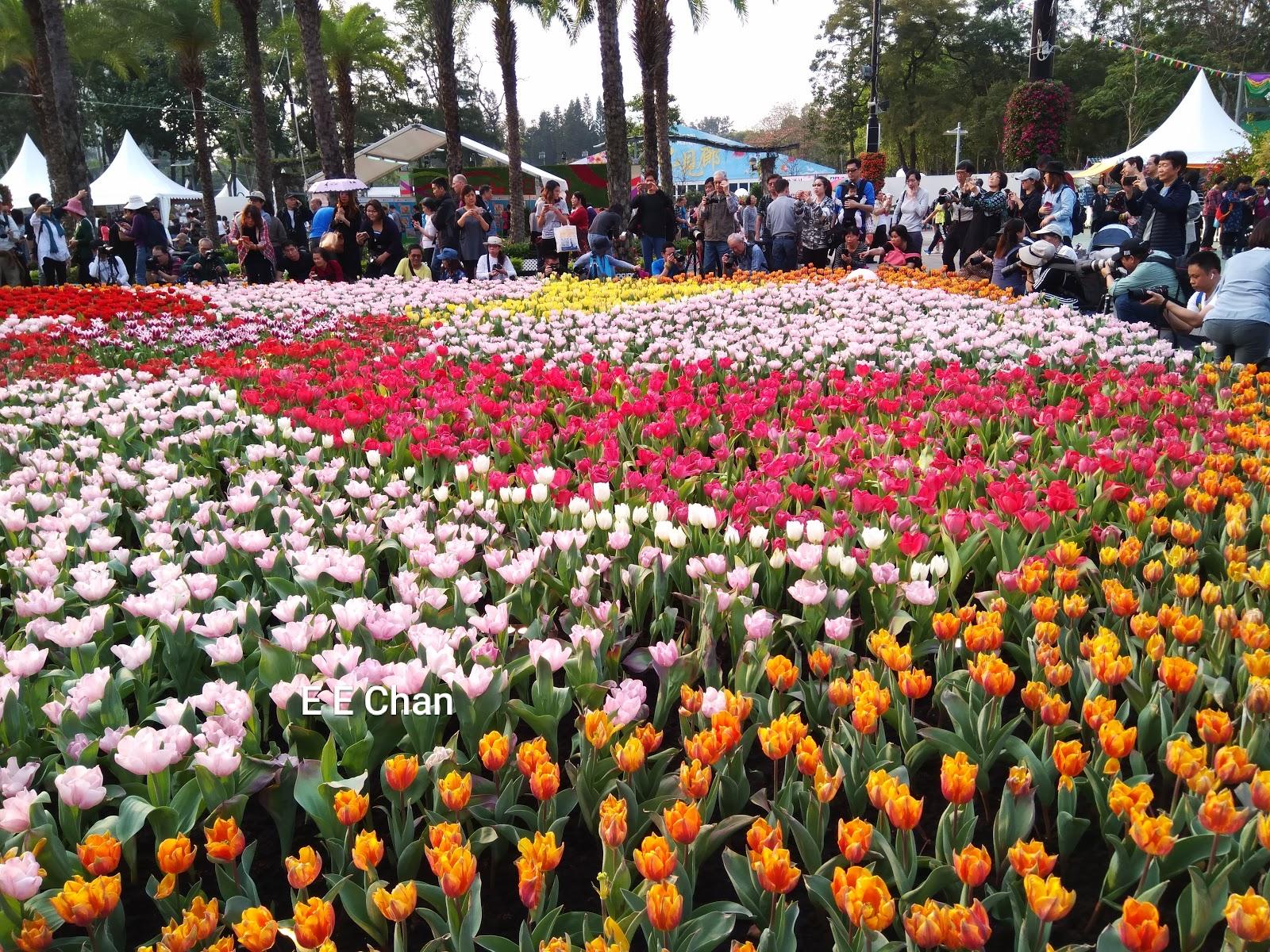 EE Blog: 香港花卉展覽2019(一)