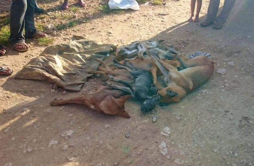 Envenenan a más de 20 perros en Villa Riva