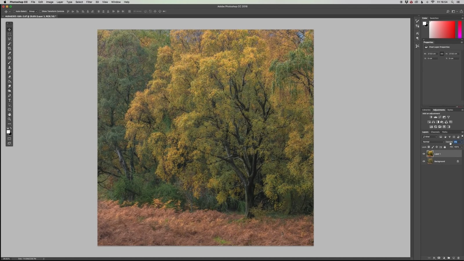 Try This Photoshop Technique With Your Woodland Images