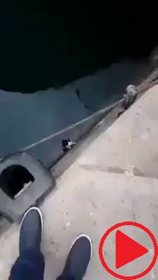 Saving a cat from falling in water