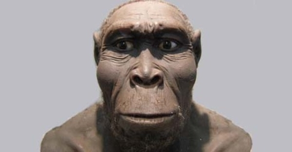 Manusia Purba Homo