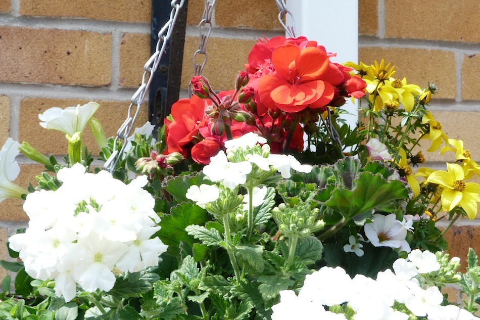 Flower Baskets Homebase : Summer garden haul with homebase lucyy writes