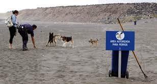 área autorizada para cães na praia