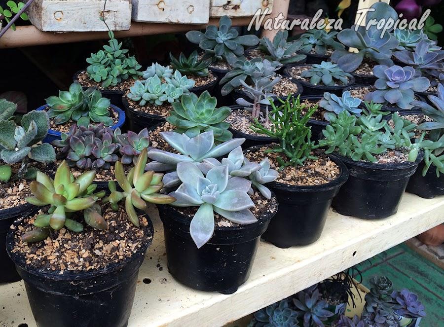 Mini-colección de plantas suculentas en un estante