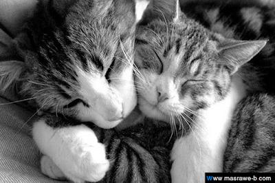 صور صور قطط كيوت 2020 خلفيات قطط جميلة جدا cats14.png