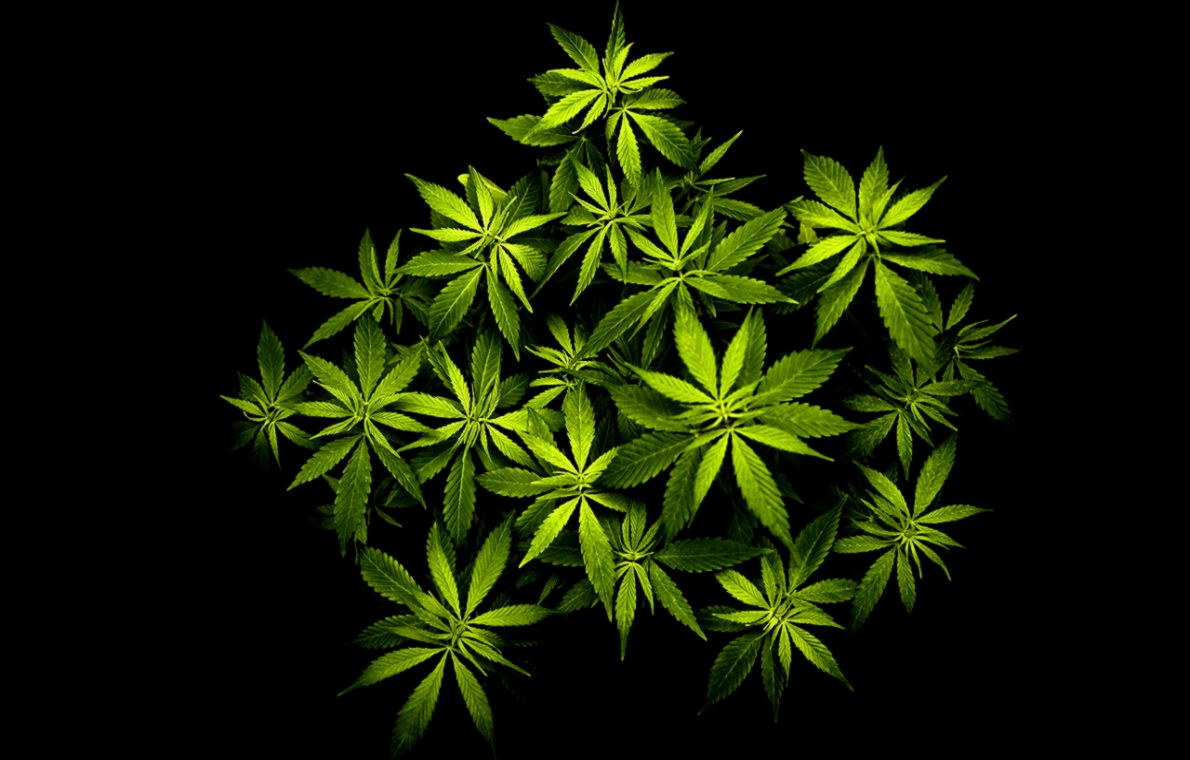 3d Wallpaper Cool Weed Leaf Marijuana Hd Wallpapers
