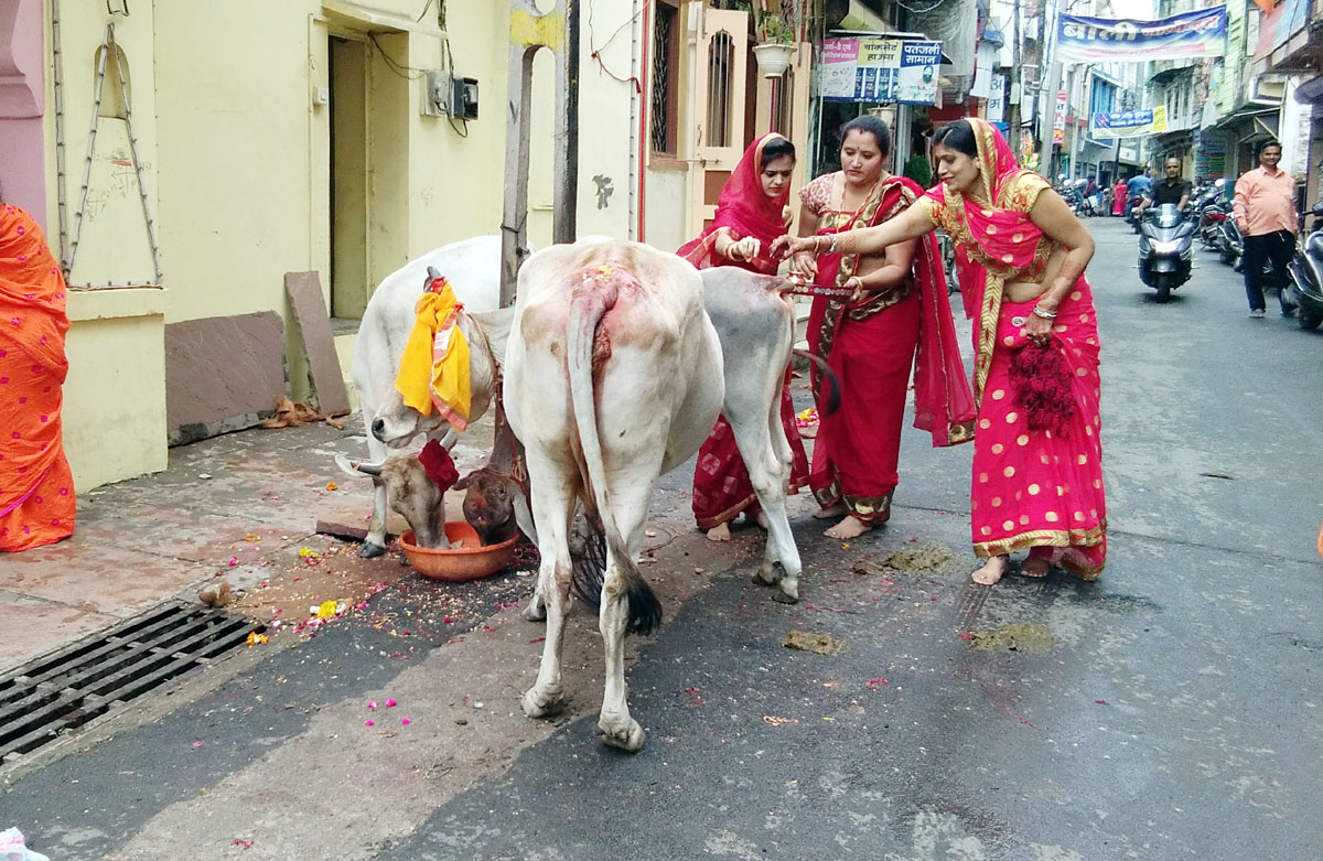 Jhabua News- नगर के विभिन्न समाजों की महिलाओं ने सामुहिक वत्स द्वादशी का पर्व उद्यापन किया