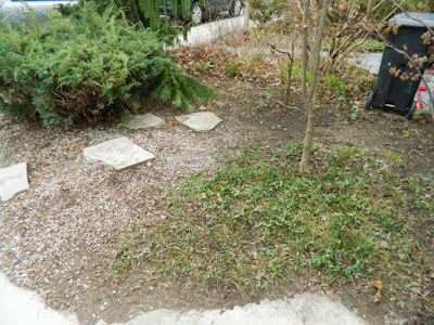 Parkdale front garden spring cleanup after by Paul Jung Gardening Services Toronto