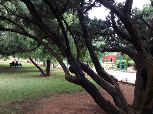 GREEN TREAT -LALBAGH