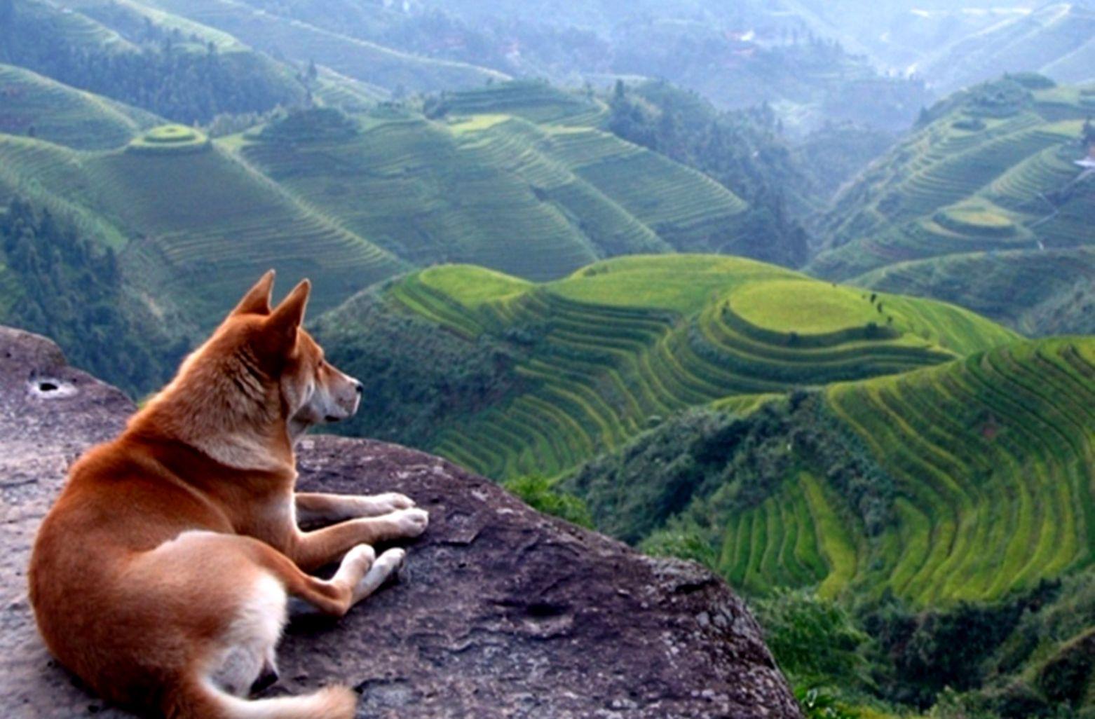 German Shepherd In Mountain Wallpaper Hd One Wallpapers