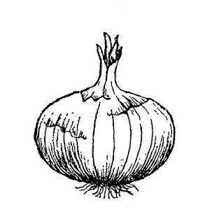vegetable onion image illustration digital download