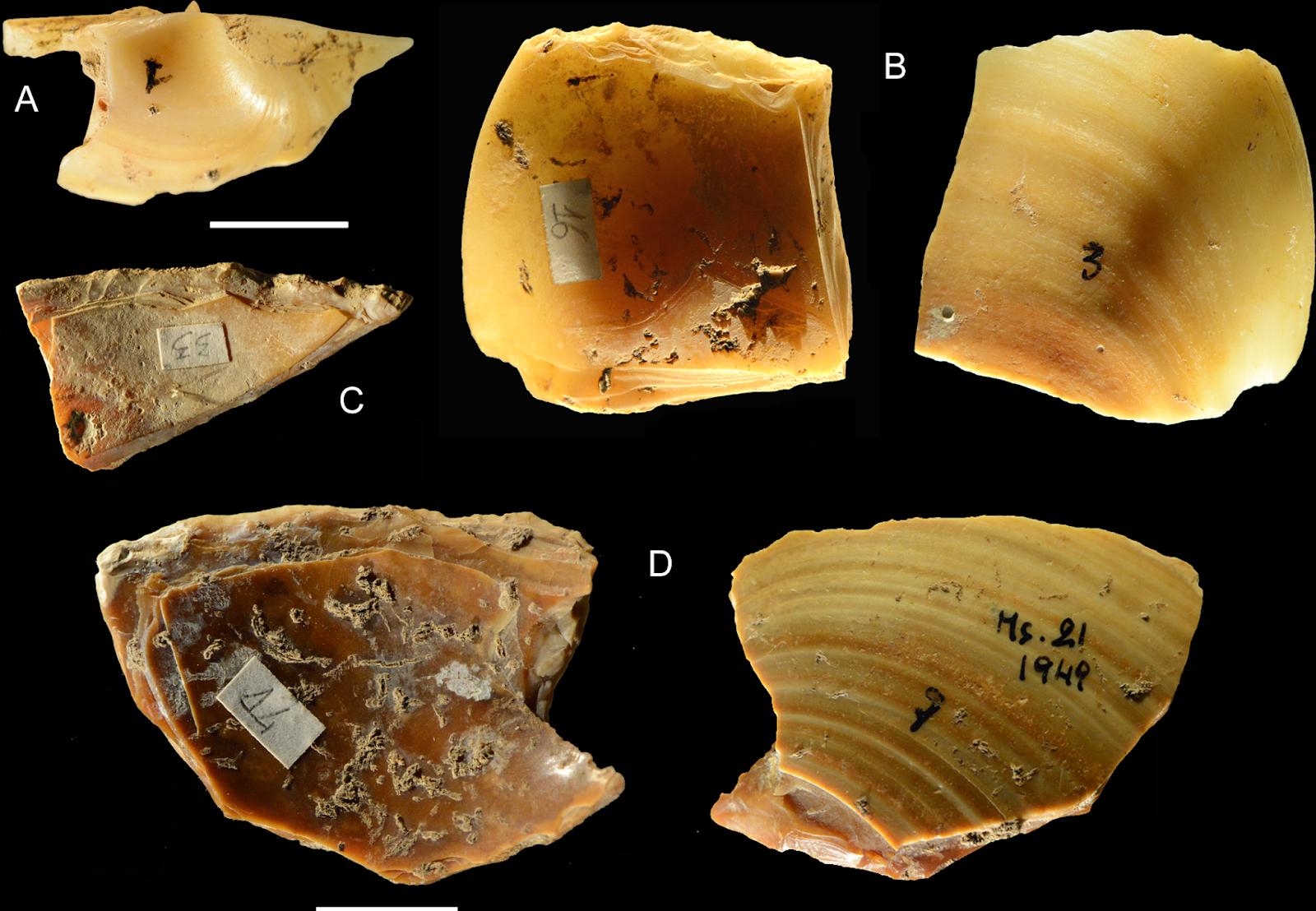 Herramientas fabricadas sobre conchas marinas por neandertales, Grotta dei Moscerini (Italia). Foto: Villa et alii.