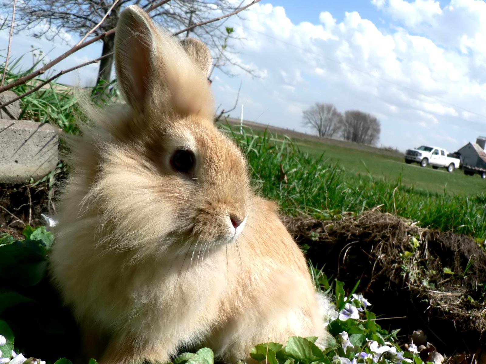 Best And Cute Hd Wallpapers Hd Animals Rabbit Wallpaper Hd