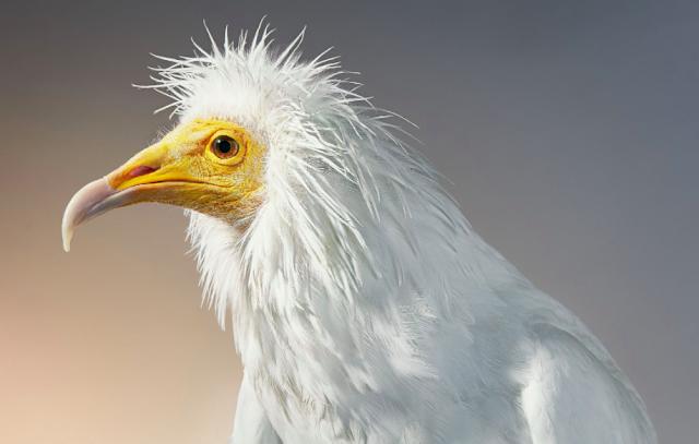 fotógrafo-Tim-Flach-conmovedoras-fotografias-animales-en-peligro-de-extinción