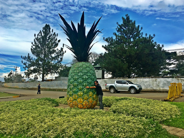 Big Pineapple near Camp Phillips Entrance. Remember to hug this big pineapple.