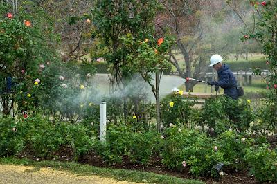 バラ園での農薬散布
